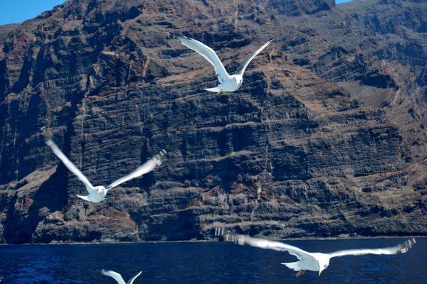 seagulls_flying_ocean_238096