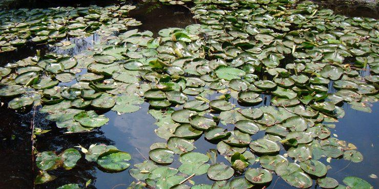Mu vete a el jard n bot nico del instituto de biolog a de for Jardin botanico unam 2015