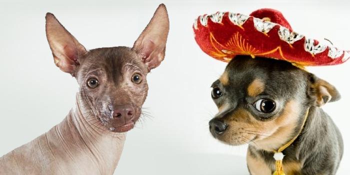 perros-mexicanos