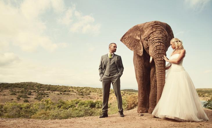boda-elefante