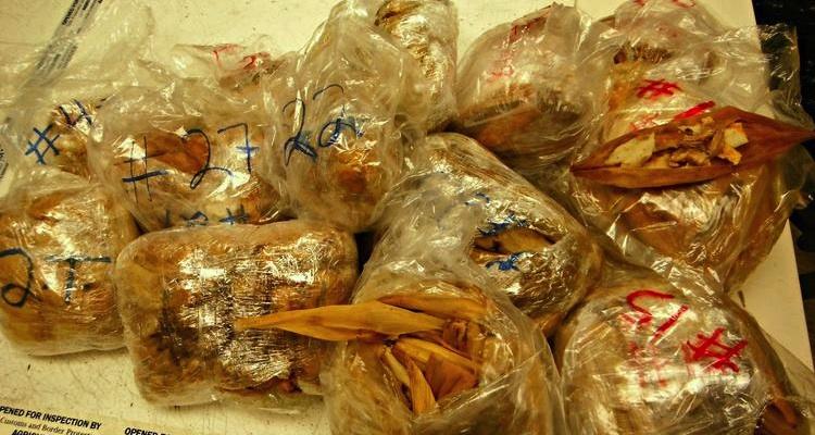 tamales-decomisados