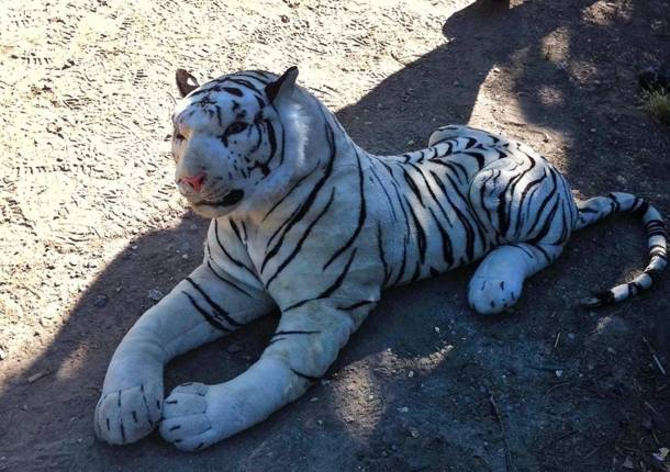 tigre-blanco-de-peluche