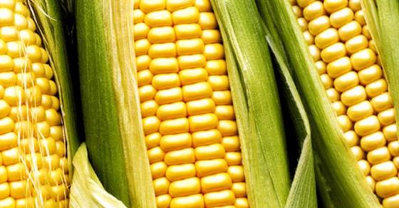 maiz post