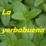 La yerbabuena, revista cultural radiofónica